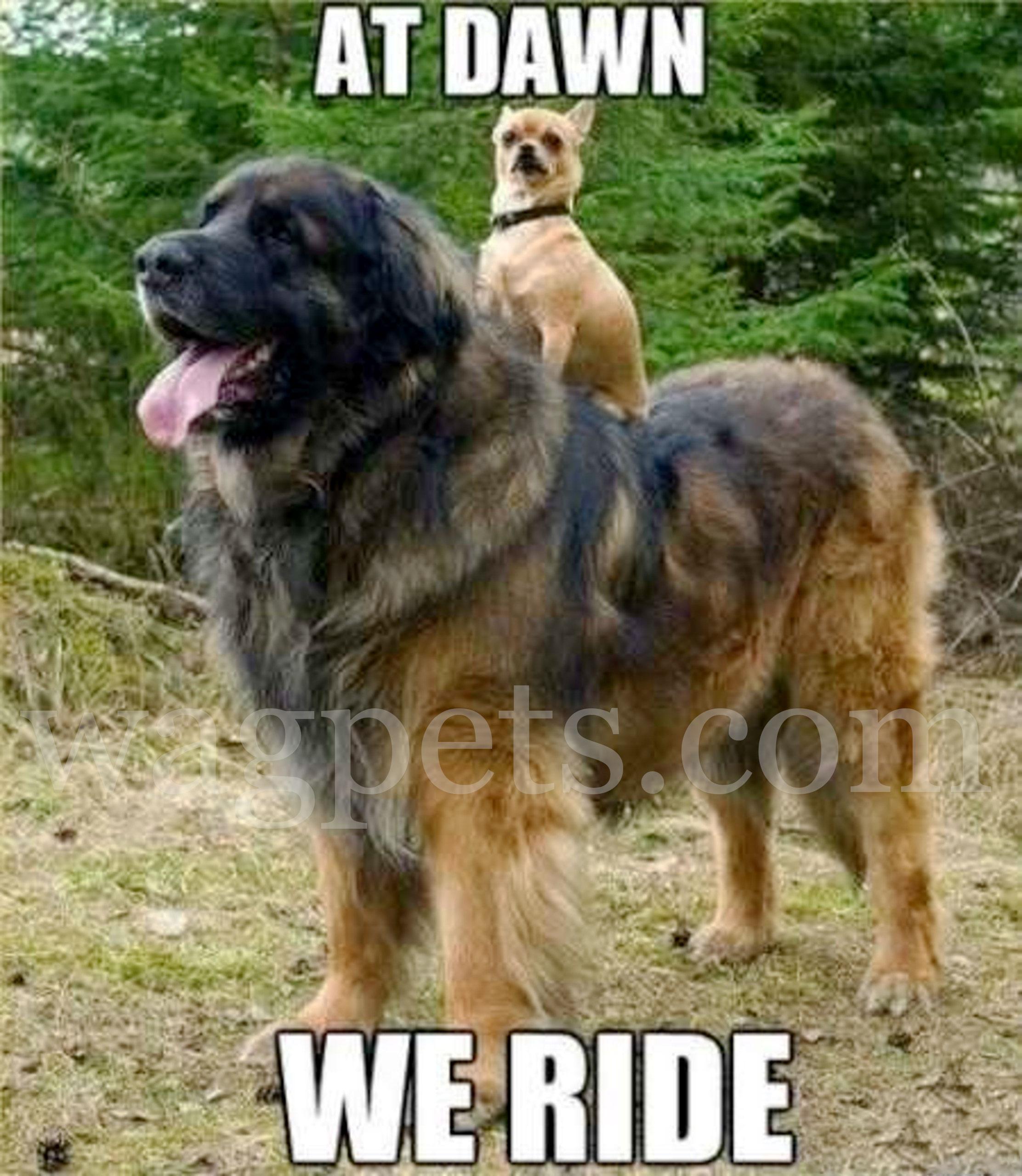 At down we ride