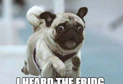 Get out of my way! I heard the fridg. Door open.