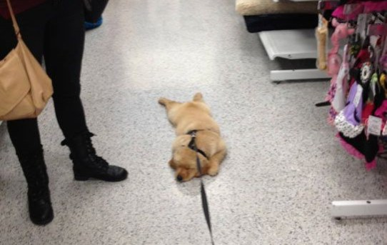 Go shopping with your dog they said. It'll be fun they said.