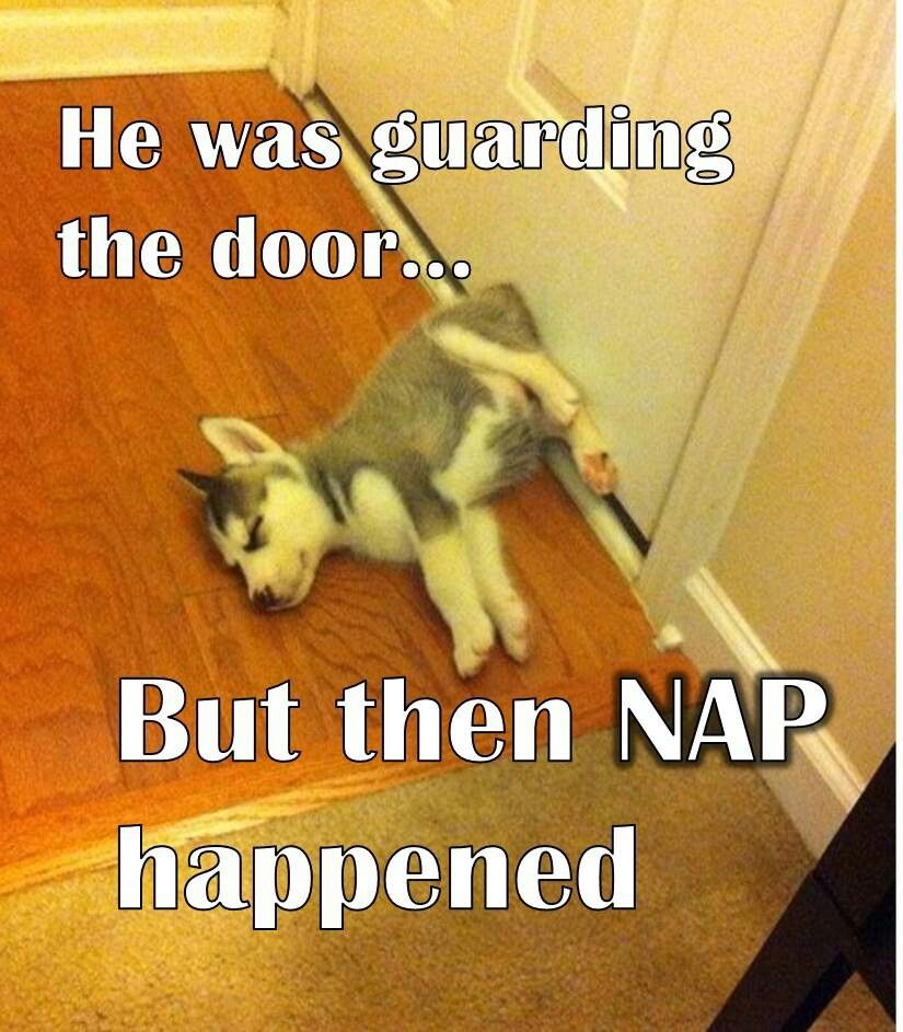 He was guarding the door… But then NAP happened