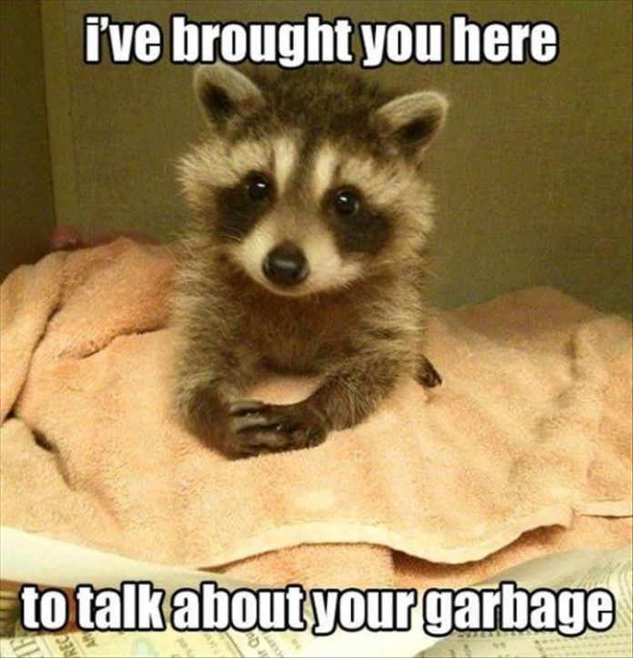 I've brought you here to talk about your garbage.