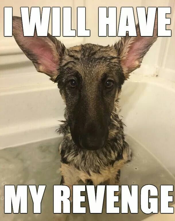 I will have my revenge