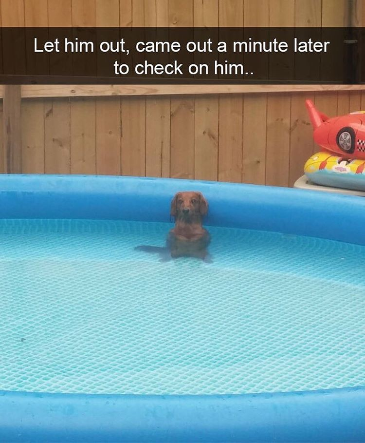Let him out, came out a minute later to check on him…