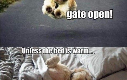 Live like someone left the gate open. Unless the bed is warm… They stay in bed