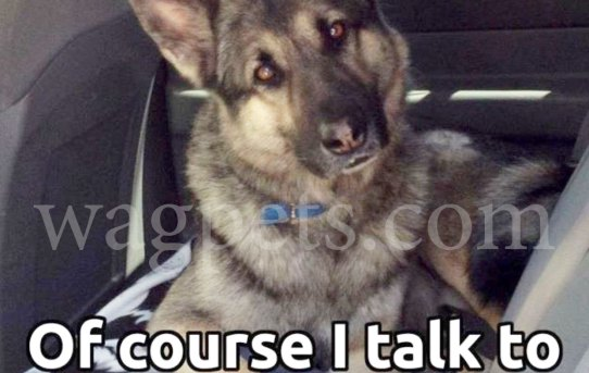 Of course, I talk to my dog… who else can I trust?