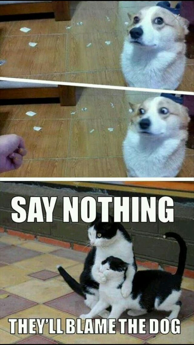Say nothing. They'll blame the dog.