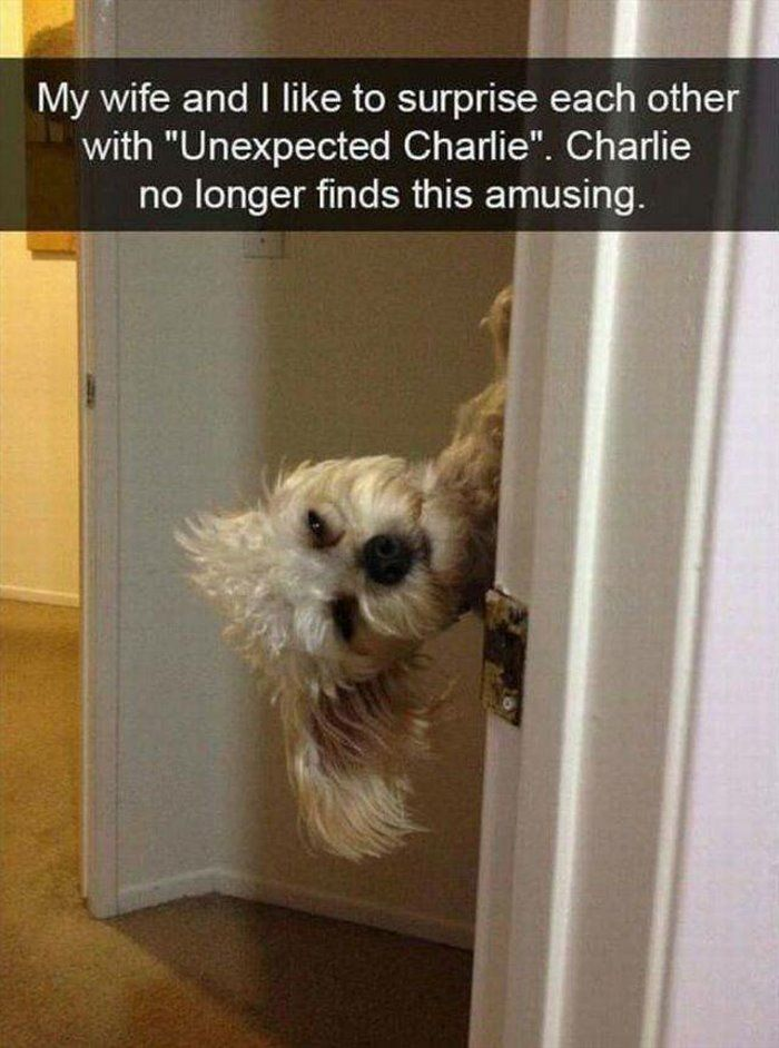 "My wife and I like to surprise each other with ""Unexpected Charlie."" Charlie no longer finds this amusing."