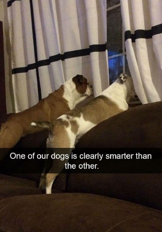One of our dogs is clearly smarter than the other.