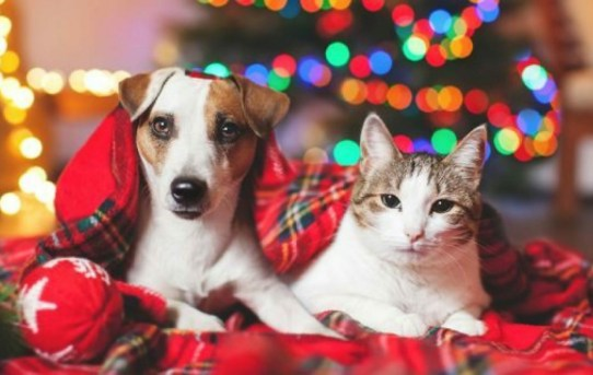 The Essentials Of Keeping Your Pets Safe At Christmas