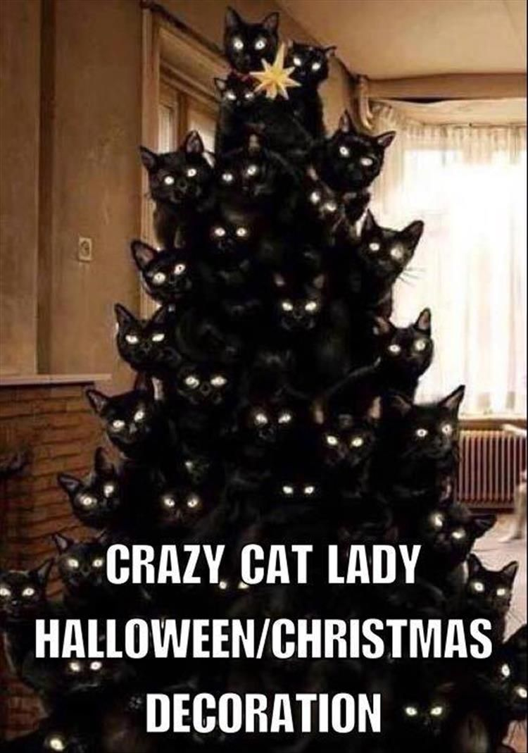 Crazy cat lady Halloween/Christmas decoration