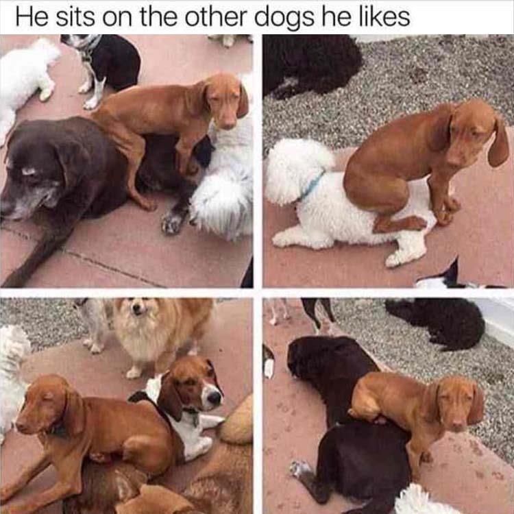 He seats on the other dogs he likes