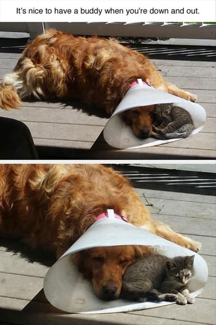 It's nice to have a buddy when you're down and out.