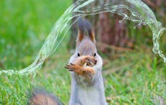 Squirrel has mastered water bending