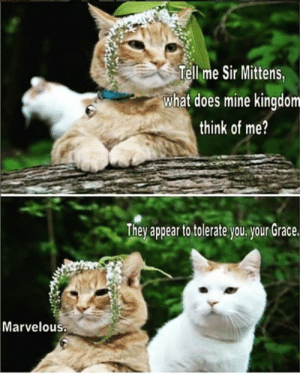 Tell me Sir Mittens, what does mine kingdom think of me? They appear to tolerate you, your Grace. Marvelous.