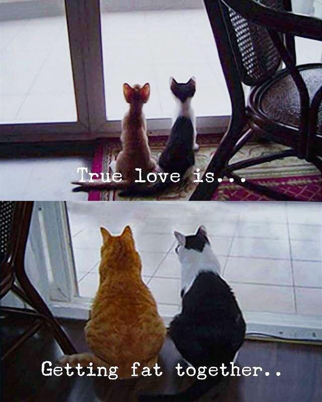 True love is… Getting fat together…