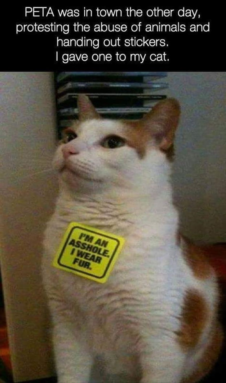 PETA was in town the other day, protesting the abuse of animals and hanging out stickers. I gave one to my cat.