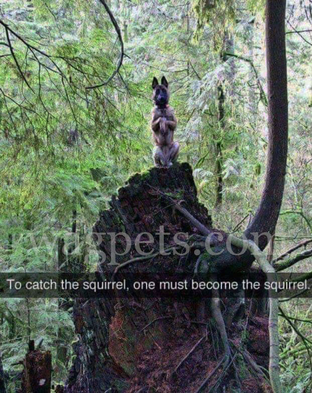 To catch the squirrel, one must become the squirrel.