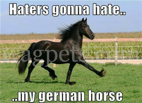 Haters gonna hate… my German horse