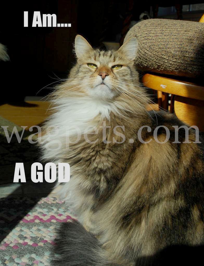 I am… A God
