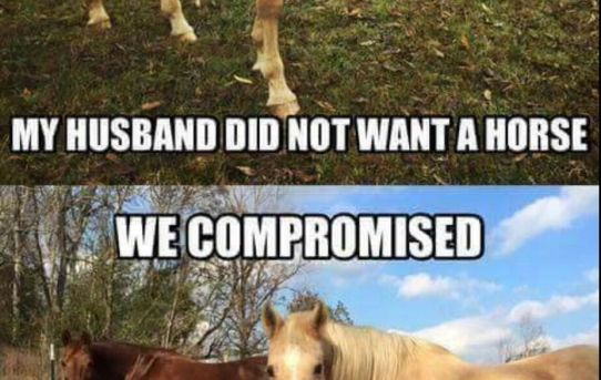 I wanted a horse. My husband did not want a horse. We compromised. I got two horses.