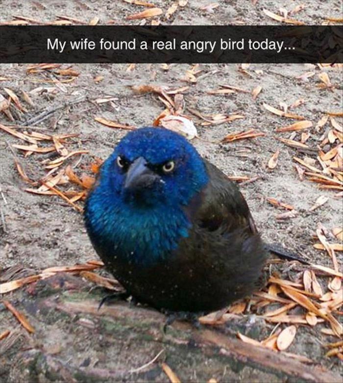My wife found a real angry bird today…