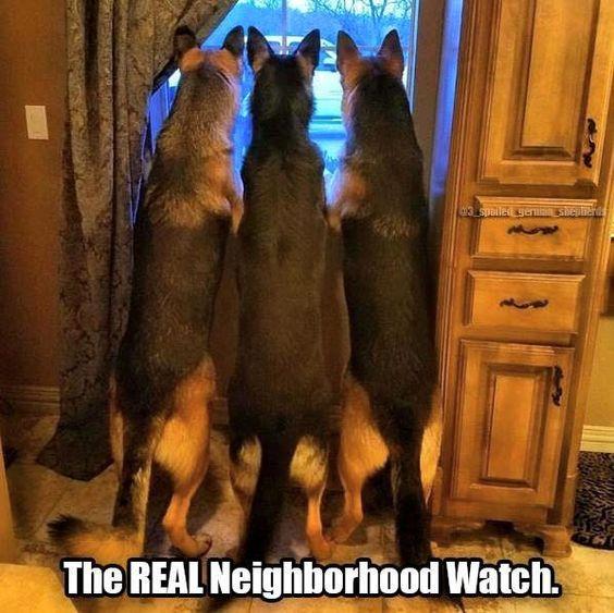 The REAL Neighborhood Watch.