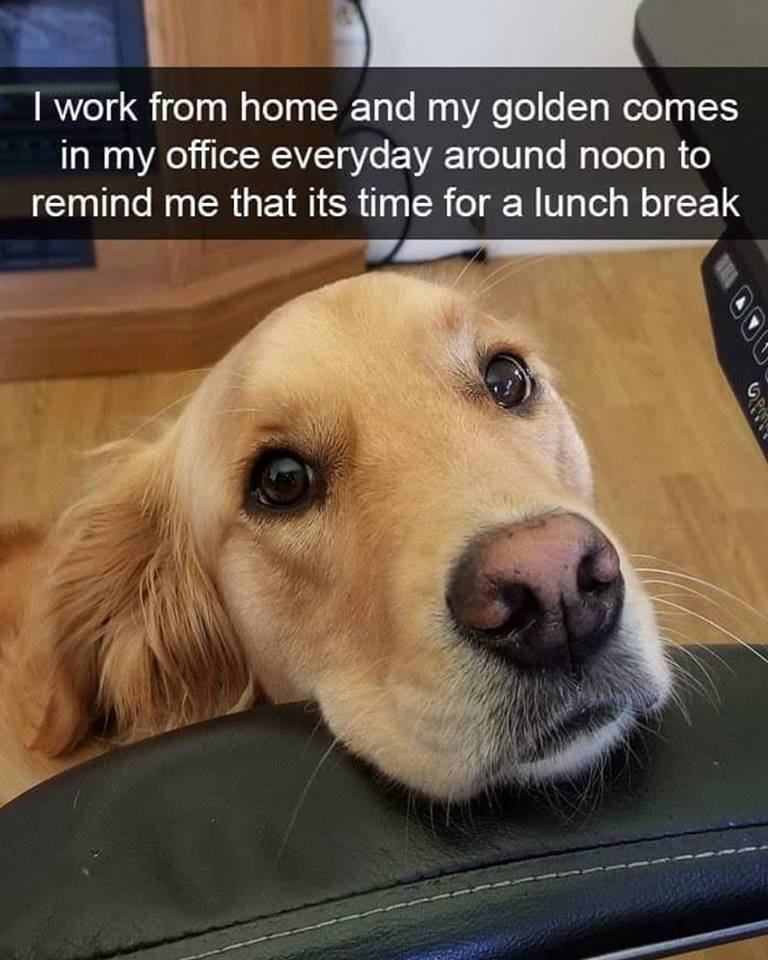 I work from home and my golden comes in my office everyday around noon to remind me that it's time for a lunch break