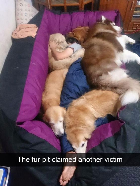 The fur-pit claimed another victim