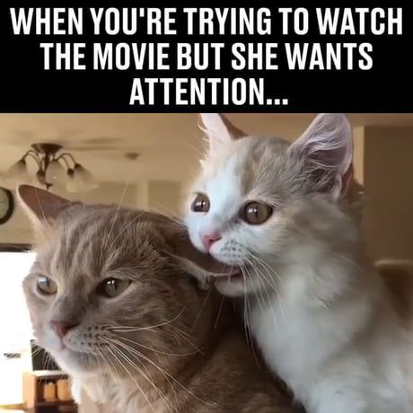 When you are trying to watch the movie but she wants attention