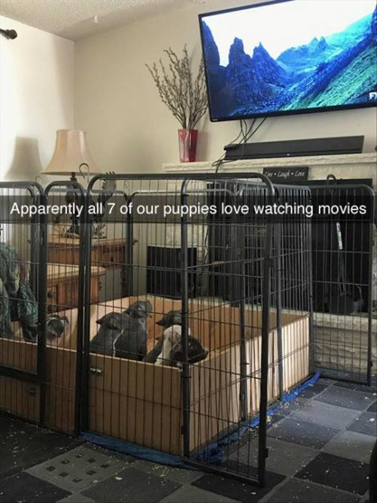 Apparently all 7 of our puppies love watching movies