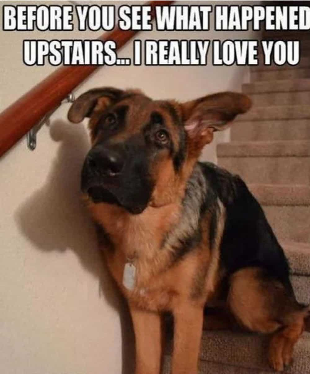 Before you see what happened upstairs… I really love you