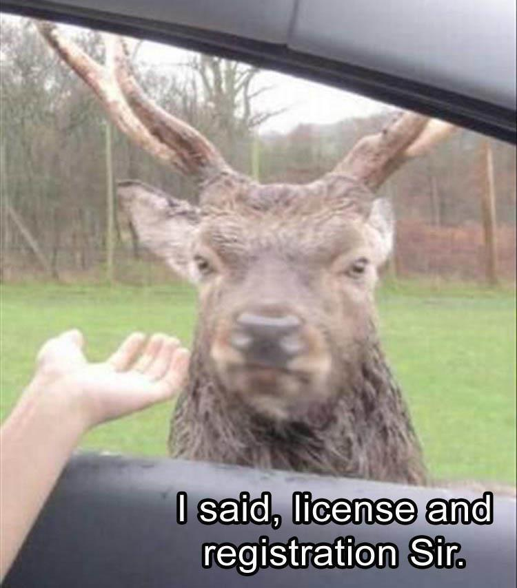 I said, license and registration, Sir.