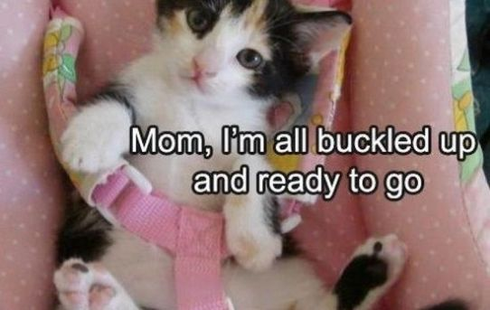 Mom, I'm all buckled up and ready to go