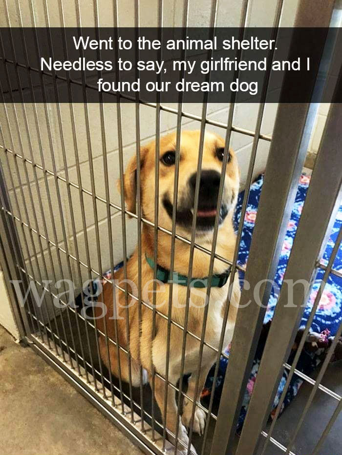 Went to the animal shelter. Needless to say, my girlfriend and I found our dream dog