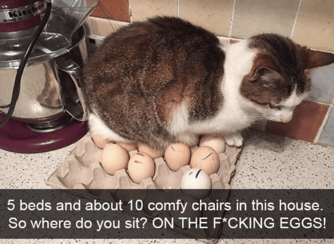 5 beds and about 10 comfy chairs in this house. So where do you sit? On the f*cking eggs?
