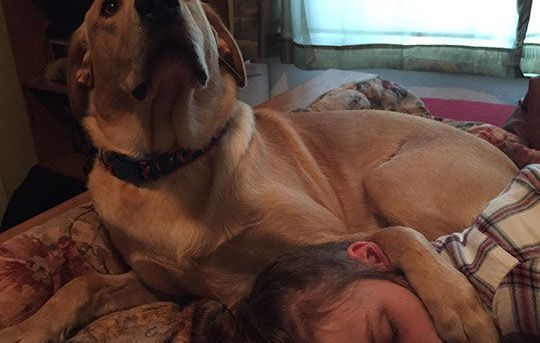 My girlfriend fell asleep with my dog and he gave me this look after I kissed her on the cheek…