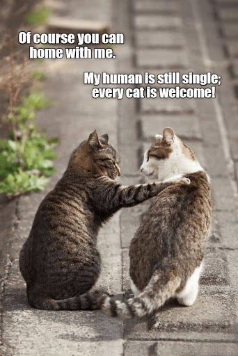 Of course, you can home with me. My human is still single; every cat is welcome!