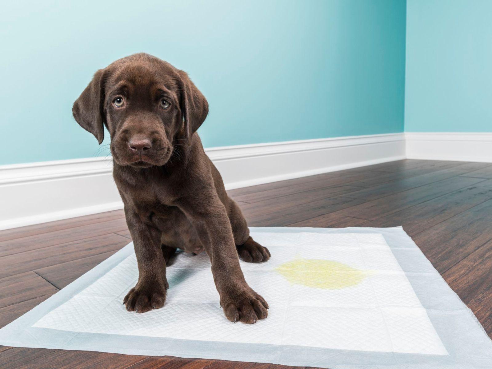 Puppy pee pad