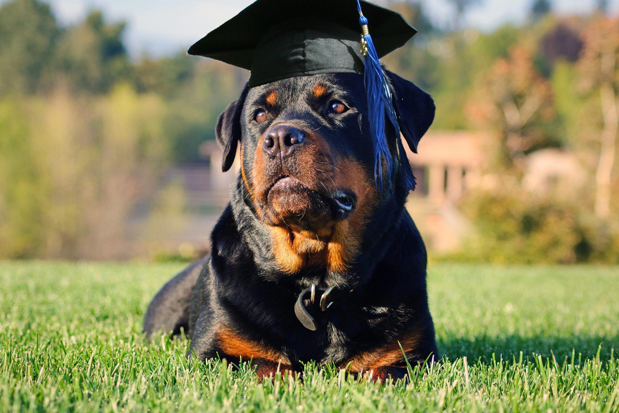 The 10 Most Intelligent Dog Breeds