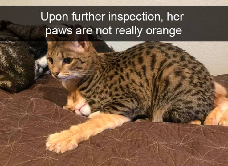 Upon further inspection, her paws are not really orange