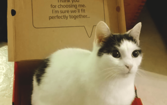 A friend's cat, that's a former stray, sitting in a shoe box (with quite the fitting text)