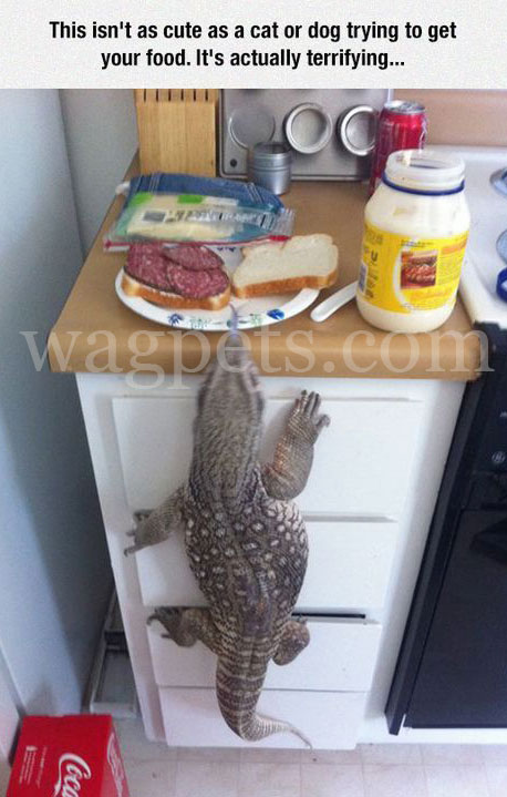 It isn't a cute as a cat or dog trying to get your food. It's actually terrifying…