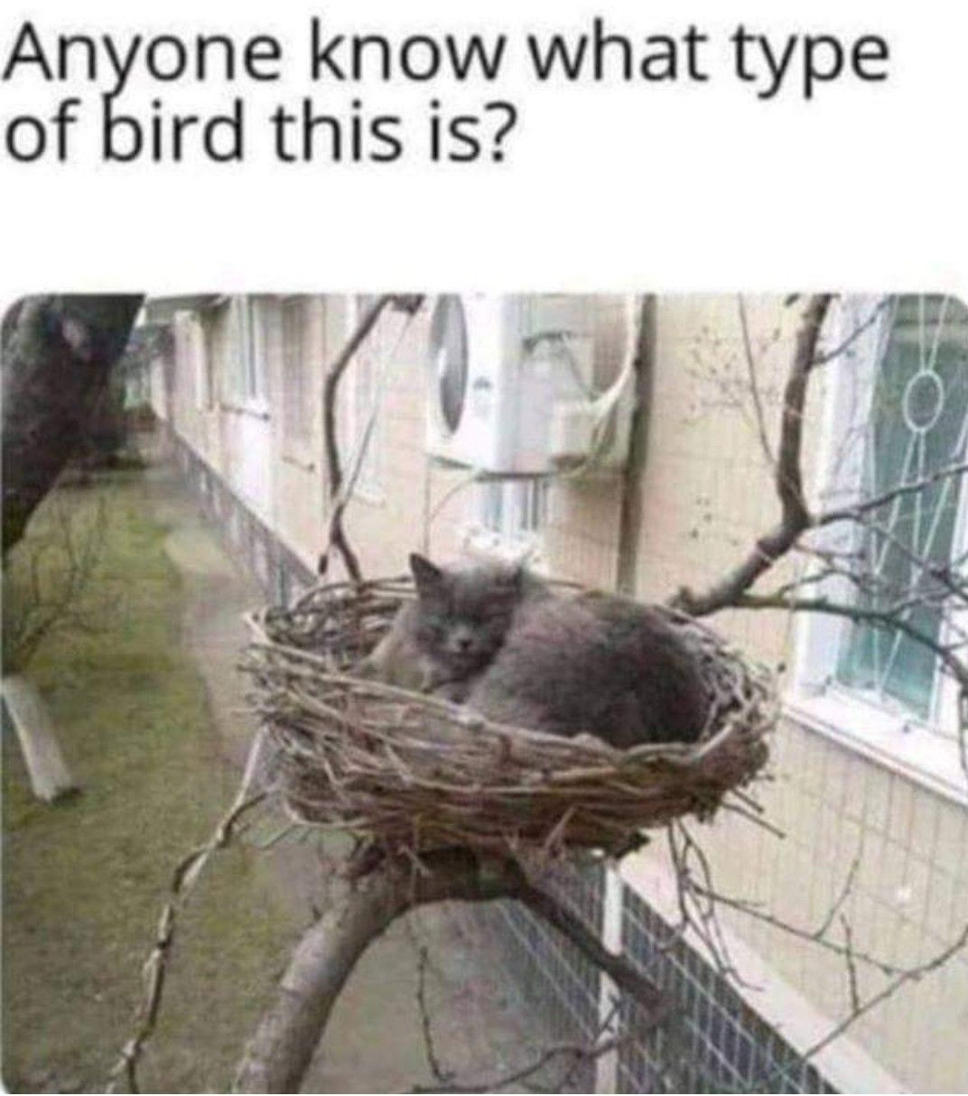 Anyone know what type of bird this is?