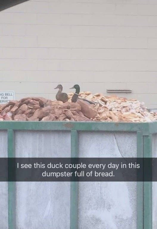 I see this duck couple every day in this dumpster full of bread.
