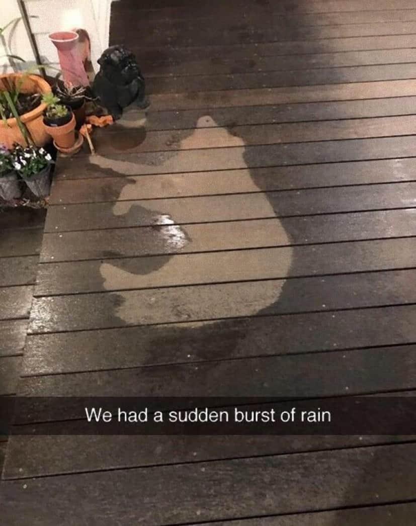 We had a sudden burst of rain