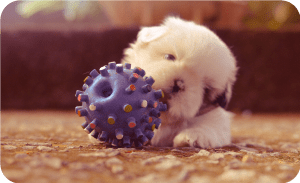 Dog toy with treats inside rubber ball
