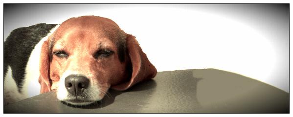 Dog dining tips