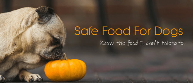safe food for dogs cover