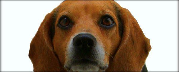 dog eye expressions