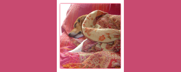 dog friendly hotels south of france